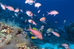 Spotlight on strong protection zones in Marine Protected Areas