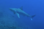 Code of Conduct for responsible tourism to protect the sandbar shark Carcharhinus plumbeus